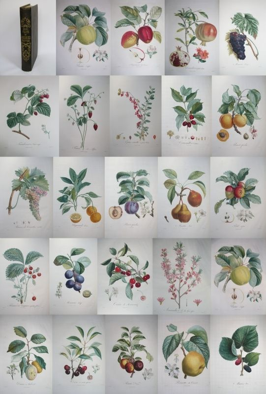 27 best verger images on pinterest fruit trees orchards and exotic fruit. Black Bedroom Furniture Sets. Home Design Ideas