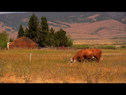Occam's Grazer: An In-depth Introduction to Holistic Management - YouTube