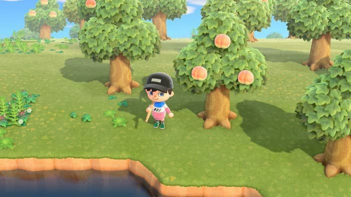 Import Foreign Fruit Trees For Extra Bells Animal Crossing Rare Fish New Animal Crossing