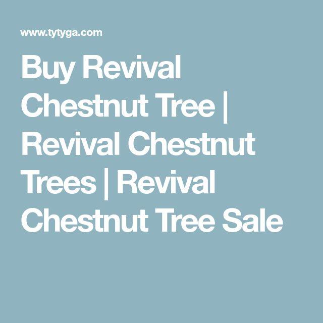 Buy Revival Chestnut Tree | Revival Chestnut Trees | Revival Chestnut Tree Sale