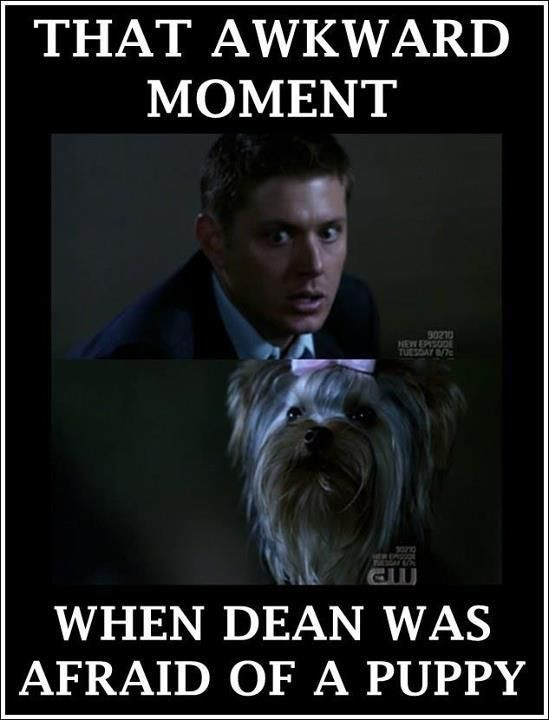 Dean Winchester, fearless against ghosts and demons, terrified of a dog and cats