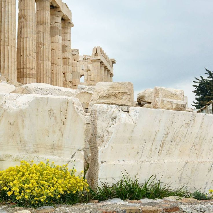 · still alive ·  #ruins #alive #life #parthenon #athens #greece #greek #acropolis #archaeology #columns #classical #architecture #archilovers #sublime #stone #break #broken #flowers #grey #sky #clouds