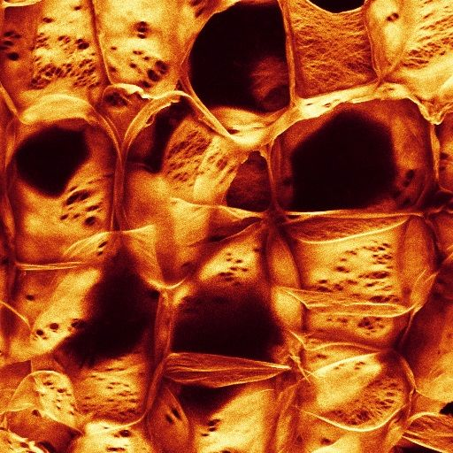 Why cells microscopic