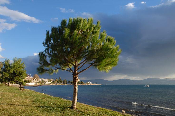De bomen groeien bijna tot in de zee op Evia, waar ter wereld vind je zo een groen eiland ? Juist ! in Griekenland !  http://www.prinosreizen.nl/evia/evia-noord