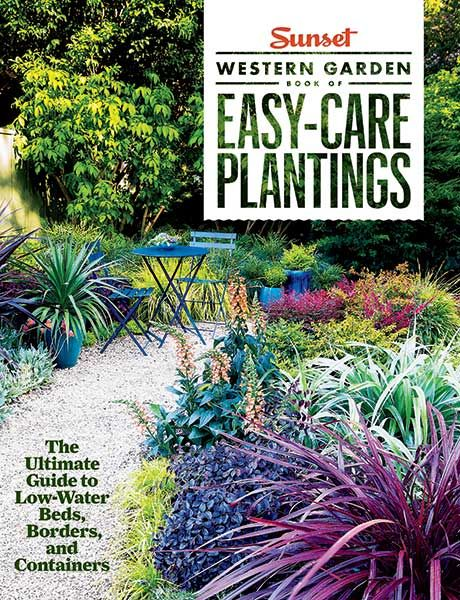 18 best gardening images on pinterest small gardens for Low care garden plants
