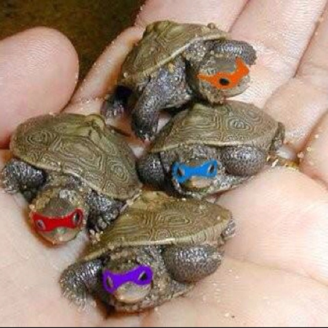 left him a regular turtle 3 real life ninjas turtles mutant ninjas ...