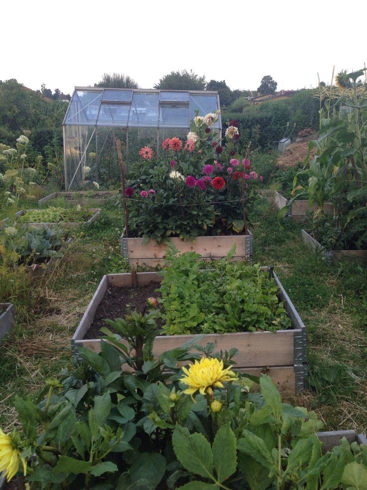 My messy garden