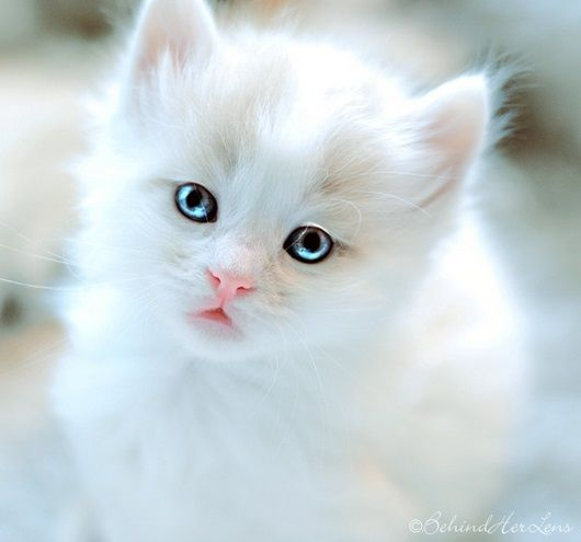 es mi angel gatuno preferido.Me encanta