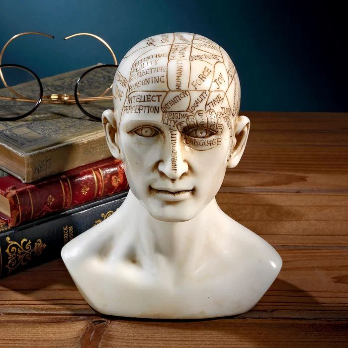 Victorian Decor, Vintage Decor, Phrenology Head, Macabre Decor, Parlor Games, Angel Wings Wall Decor, Wing Wall, Crushed Stone, Book Of Hours