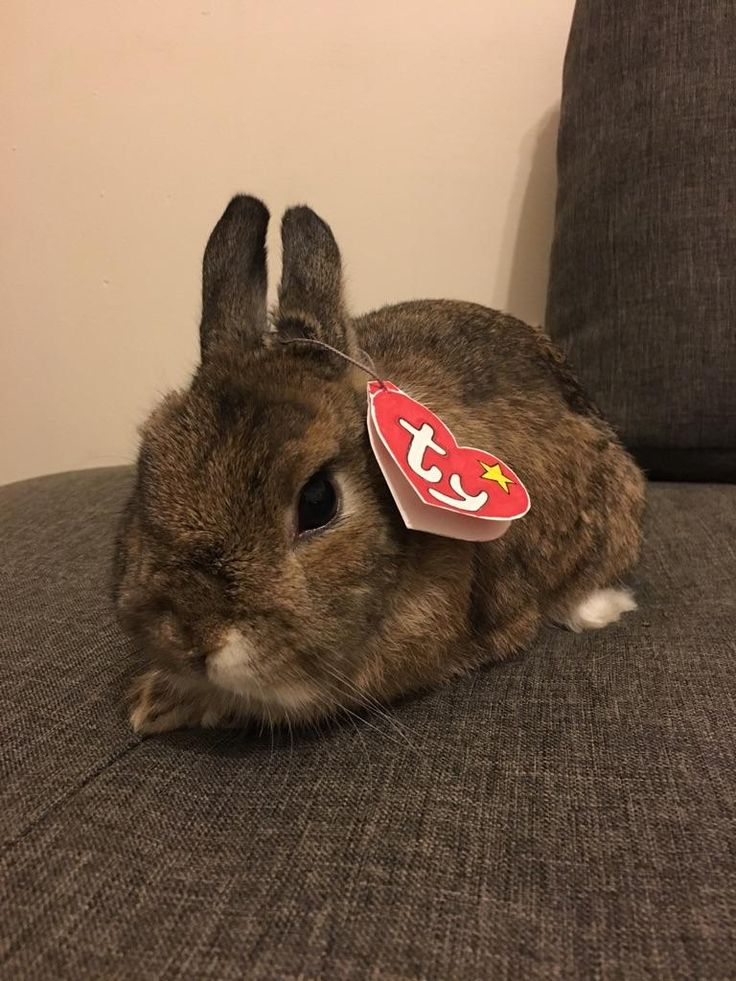 Pinot's Halloween costume. It lasted for about 30 seconds (x-post from /r/Rabbits)