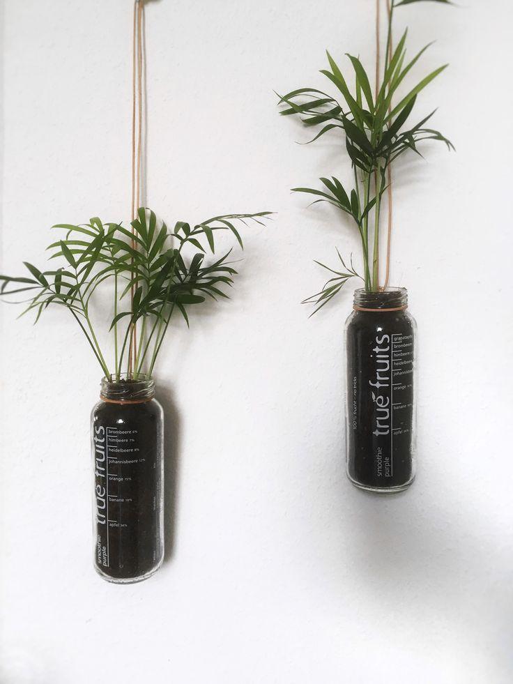 Palme im Glas #pflanzeimglas #diyblumentopf #makra…