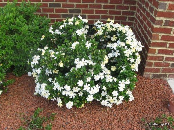 Landscaping Stone Chips : Quot landscaping for red brick house when we have a dark spot in our garden it becomes