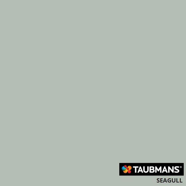 #Taubmanscolour #seagull