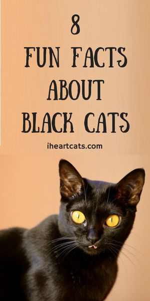 8 Fun Facts About Black Cats