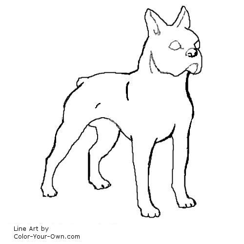 Boston Terrier Coloring Page Google Search Dog