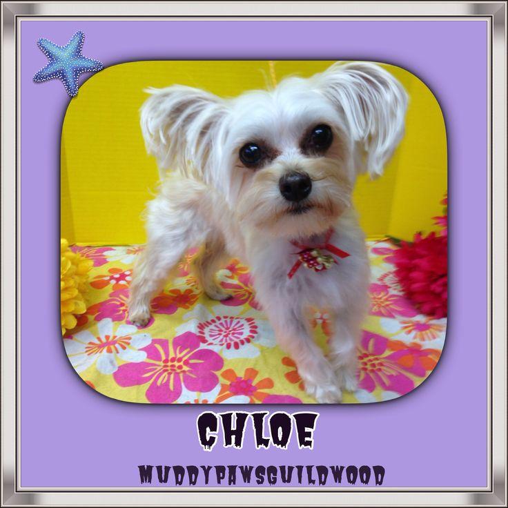 Chloe looking her besf