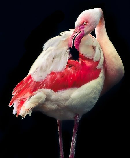 Flamingo - Nakuru Park, Kenya Photo by Nora de Angelli -- National Geographic Your Shot