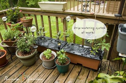 38 best images about irrigation system for my porch on for Home garden irrigation design