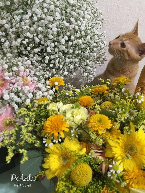 花と猫   flowers and  red tabby cat