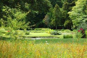 A Garden Wedding Venue - The Waterlily Gardens. Waihi