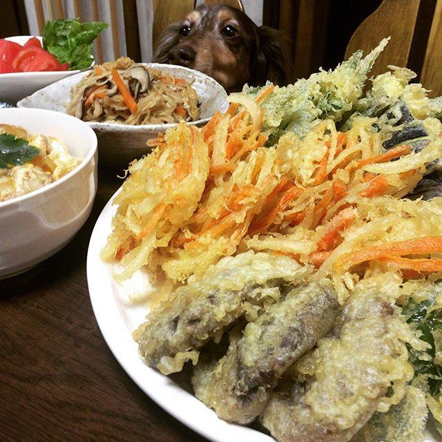 今日の夕ご飯は、親子丼、切り干し大根の煮物、天ぷら(椎茸、大葉、オクラ、ピーマン、茄子、南瓜、玉ねぎ人参のかき揚げ)トマト #夕食#夕ご飯#おうちごはん #晩御飯#家庭料理#手料理#大皿#大皿料理 #天ぷら#食いしん坊#愛犬 #宝 #ごちそうさん