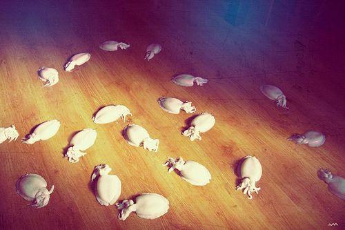 Schizophrenic herd by Adrián Madrid