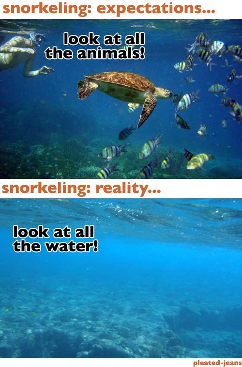 Snorkeling: Expecting Reality, Color Fish, Soo Funnies, Beaches Expecting, Fish Reality, Expecting Vs Reality, Expecting Versus, Snorkeling Expecting, Funnies Stuff