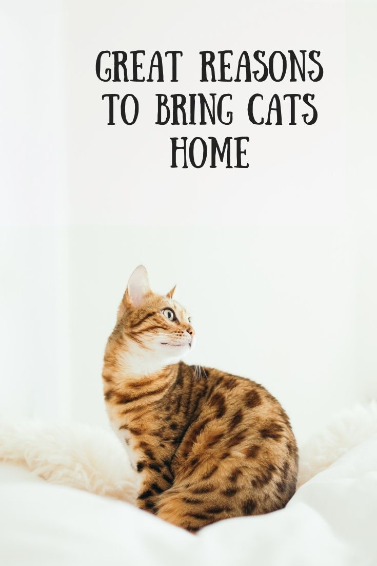 Great Reasons To Bring Cats Home Infographic Indoor Cat Cat Care Cat Training