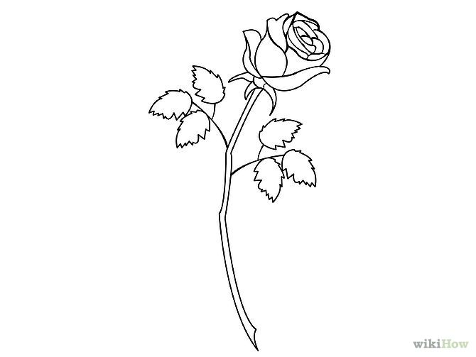 Simple Line Art Rose : Best images about floral and bouquet on pinterest