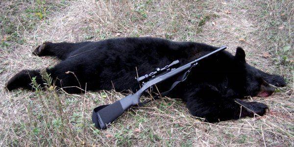 Usa, via libera al carbone e alla caccia di orsi e lupi dell'Alaska