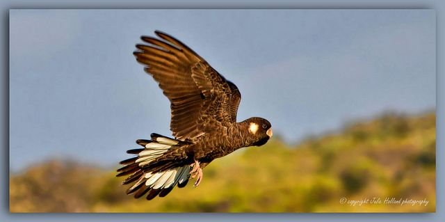 on a wing and a prayer | Flickr - Photo Sharing!