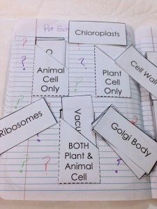 Structure of Life Interactive Notebook (INB) Pages - Cell Organelles Card Sort. Animal? Plant? Both?