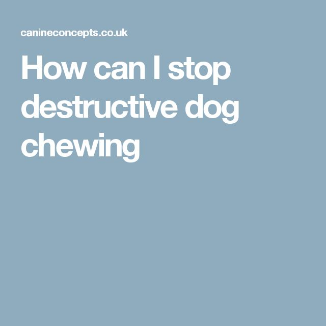 How can I stop destructive dog chewing