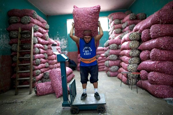 #periscopio Con un sacco di aglio del peso di 100 kg sulle spalle