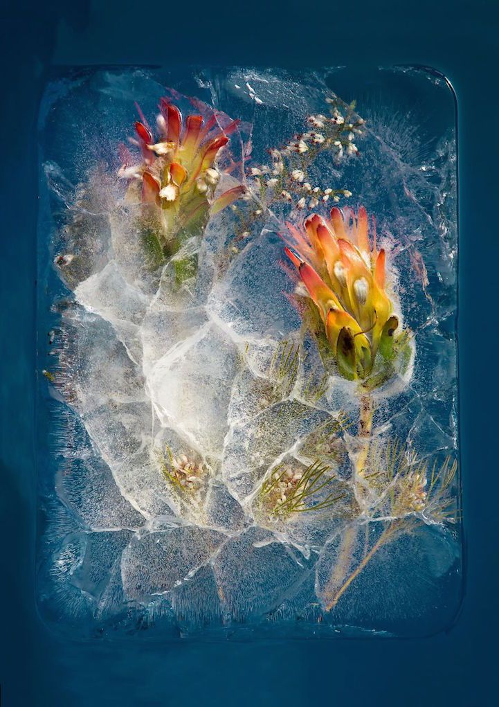 South African photographer Bruce Boydis fascinated by ice—particularly the way that objects look distorted when encapsulated inside a large ice block