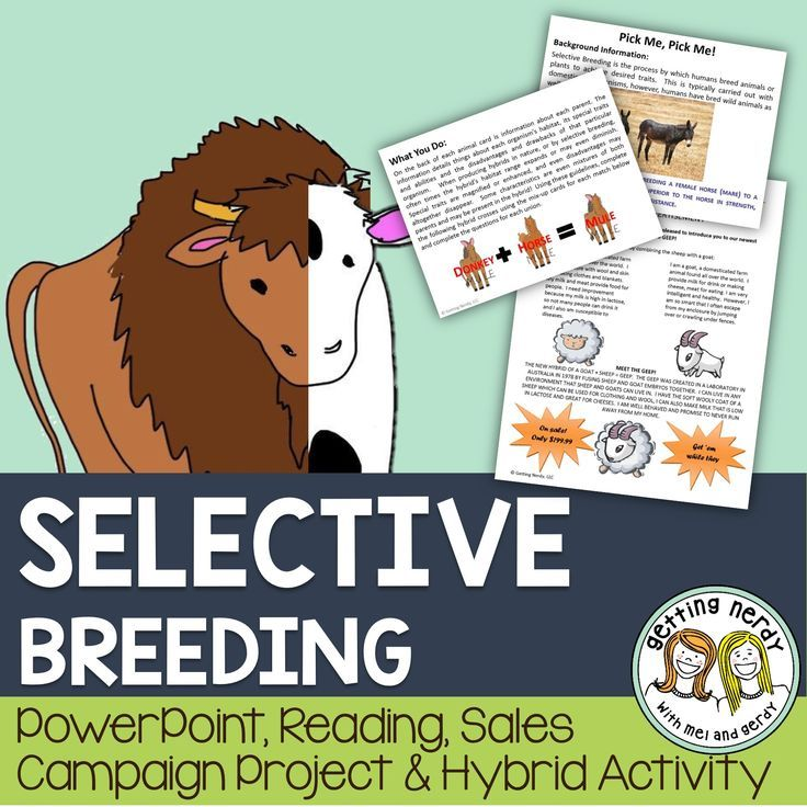 Selective Breeding and Hybridization - PowerPoint and Handouts Bundle.   Students will learn about the genetic processes of selective breeding and hybridization with this lesson complete with three activities