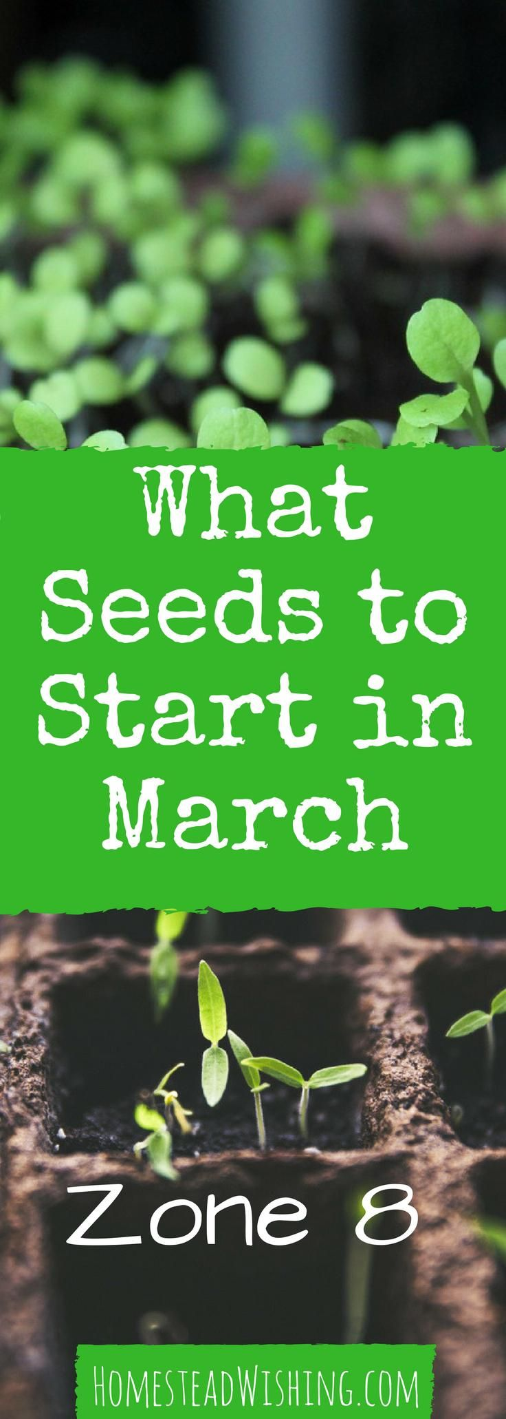 What seeds to start in March? - ZONE 8 This edition is for starting seeds indoors. Not sure what to plant? March-planting, gardening-in-March, seed-starting, online-gardening-school | http://homesteadwishing.com/what-seeds-to-start-in-march-indoors-zone-8/ | Homestead Wishing, Author Kristi Wheeler |