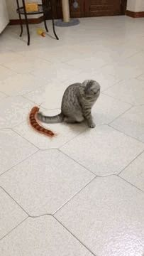 Hold my catnip while i try to count all the legs on this monster i'm hallucinating Cat GIF Central is a home of cat GIFs.