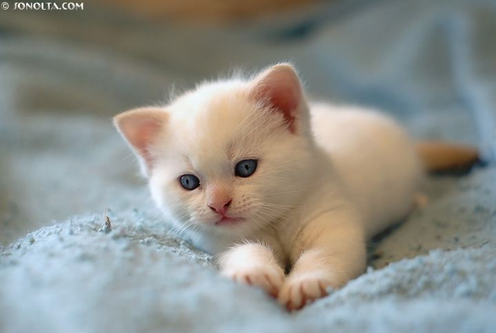 Cute White Cats and Kittens Cats are soooo cute!