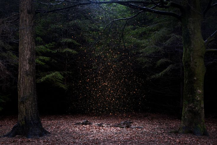 Ellie Davies: Stars 8, 2014
