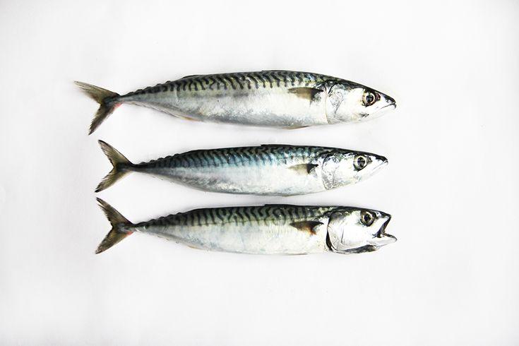 mackerel - photo © Mary Jo Hoffman from STILL blog