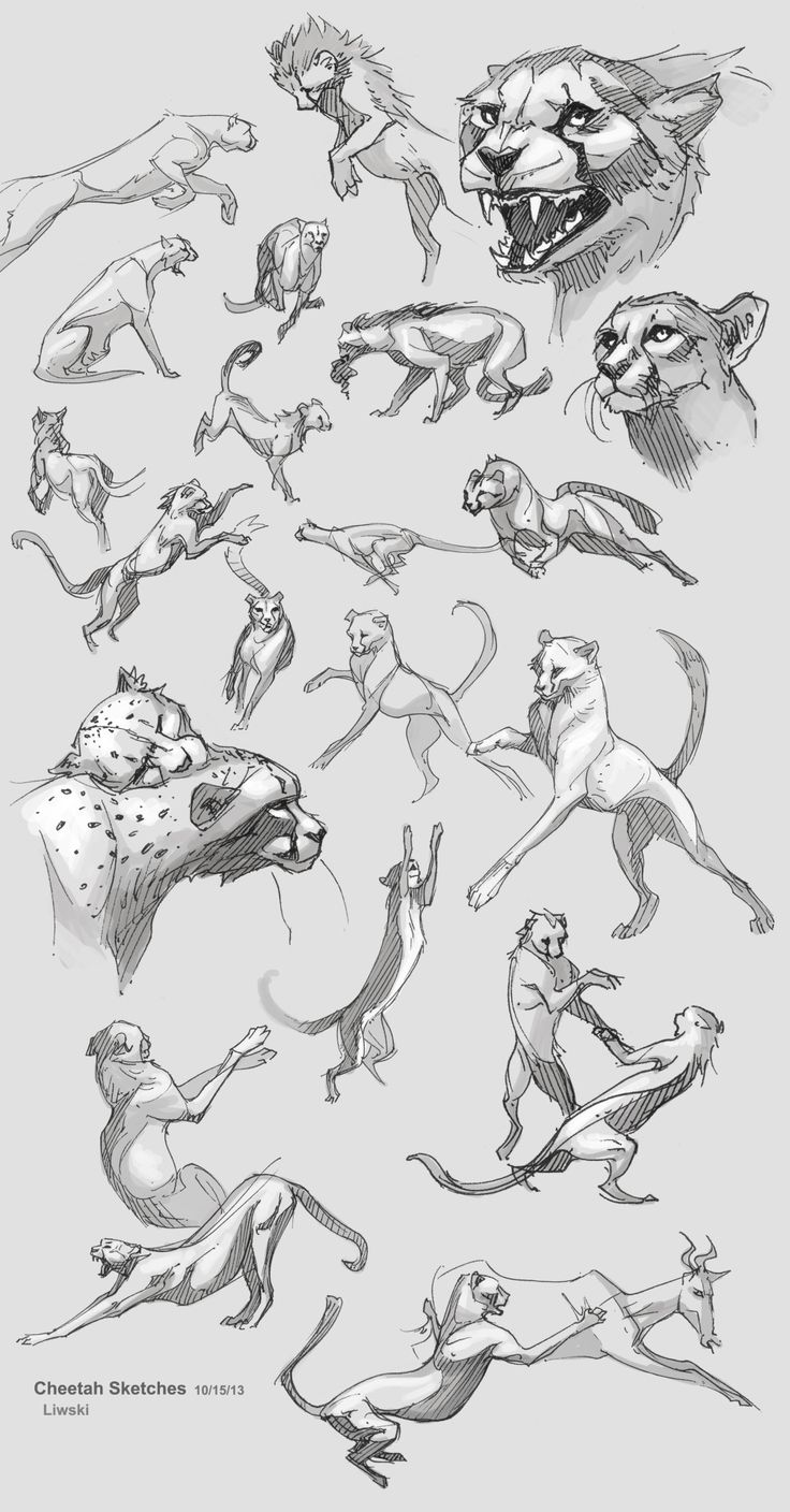 best animals images on pinterest animal drawings draw animals