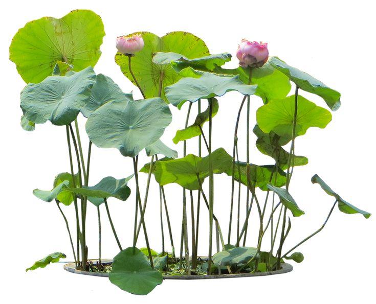 Tropical Plant Pictures: Aquatic plants planten photoshop collage