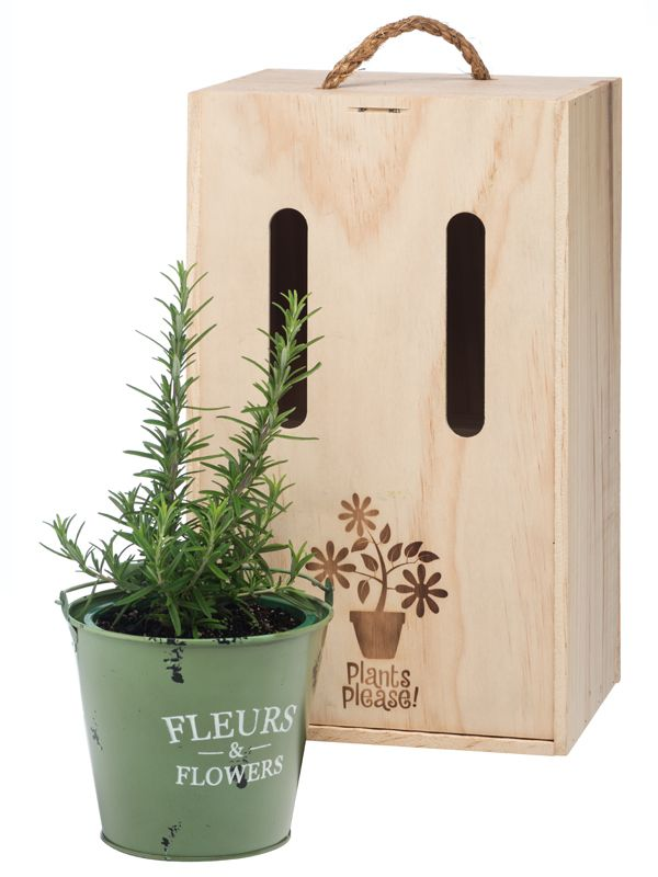 Rosemary in decorative tin pot, beautifully boxed and delivered within NZ by Plants Please!
