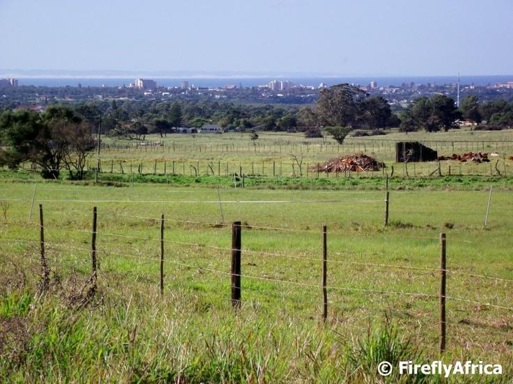My Port Elizabeth
