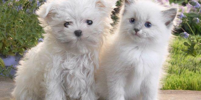 صور قطط جميلة 2018 صور اجمل قطط في العالم Cute Puppies And Kittens Cute Cats And Dogs Cute Baby Animals