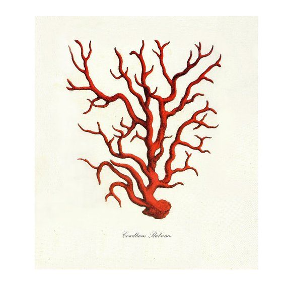 Red Coral Vintage Style Nautical Art Print Beach House Decor Etsy Red Coral Antique Illustration Coral Print
