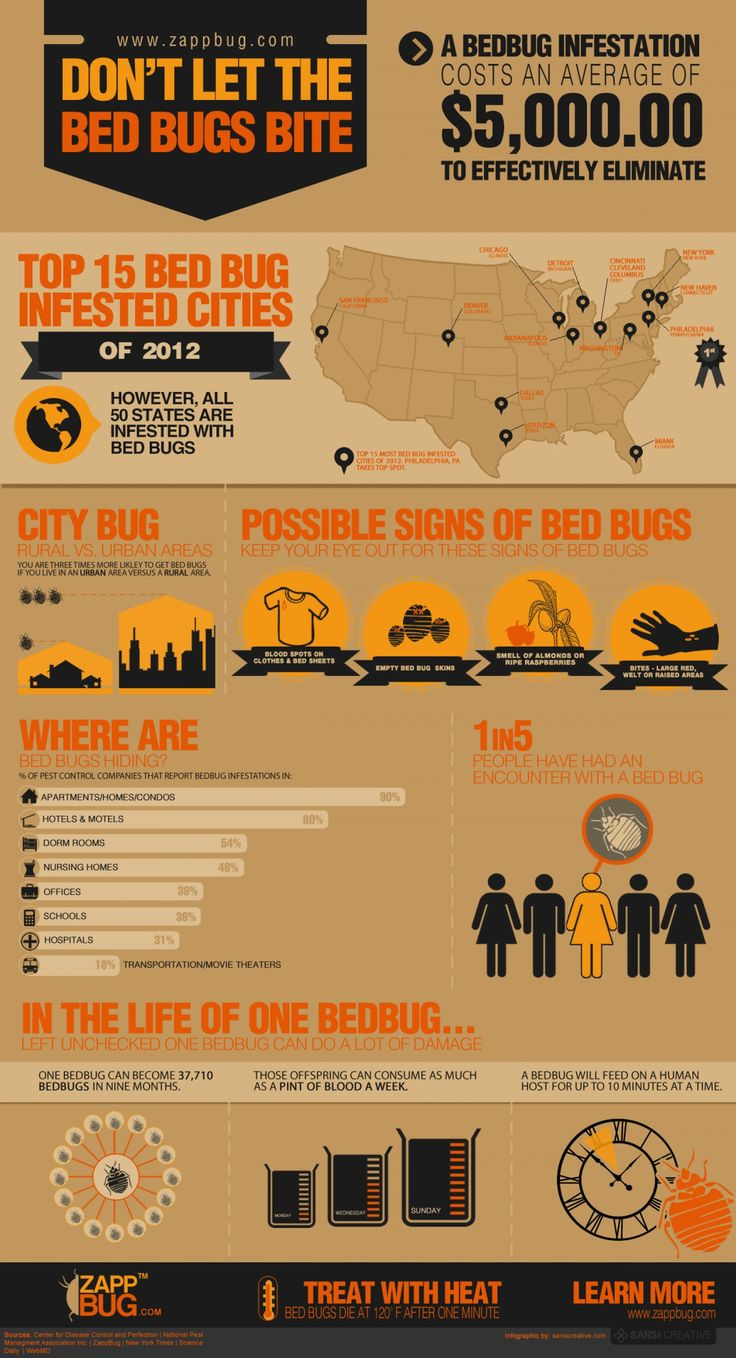 How to Get Rid of Bed Bugs [Infographic] by ZappBug | Visual.ly