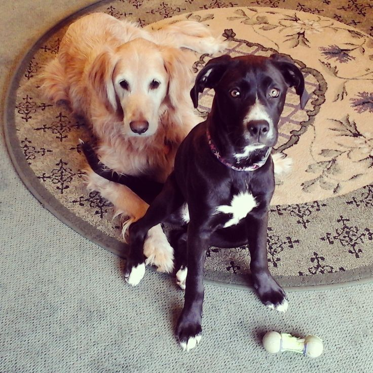 SEO Dog & his sidekick. In the running for the cutest work dogs!