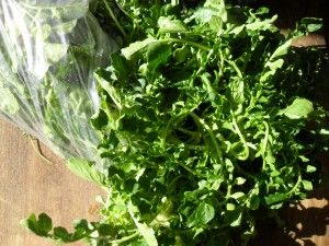 Creasies are also called upland watercress, field cress or wild watercress. They are a small leafy green that is a member of the mustard family. The flavor is similar to the pungent spice of watercress and when cooked, it can have the texture of spinach. Although creasy greens show a lot of similarities to watercress, they do not grow in water as their cousin watercress does.